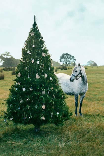 Χριστούγεννα στην εξοχή