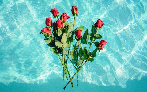 Τι σημαίνουν οι αριθμοί στα τριαντάφυλλα